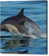Dolphin Baby Flight Canvas Print