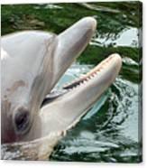 Dolphin Charm Canvas Print