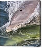 Dolphin Pair Canvas Print