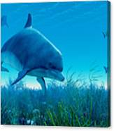 Dolphin Pod Canvas Print
