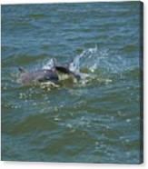 Dolphin Race Canvas Print