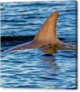 Dolphin Sighting Canvas Print