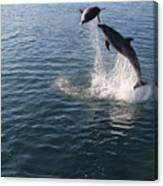 Dolphin Watch Canvas Print