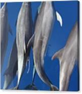 Dolphin2 Canvas Print