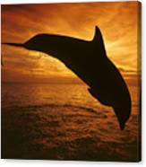 Dolphins And Sunset Canvas Print