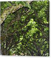 Dome Of Trees Canvas Print