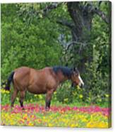 Domestic Horse In Field Of Wildflowers Canvas Print