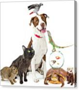 Domestic Pets Group Together With Copy Space Canvas Print