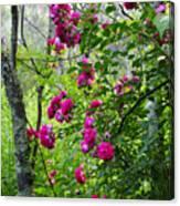 Domestic Rose Gone Wild Canvas Print