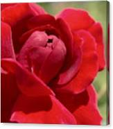 Dominica Red Rose Canvas Print