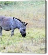 Donkey 005 Canvas Print