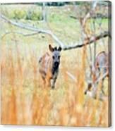 Donkey 006 Canvas Print