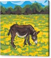 Donkey And Buttercup Field Canvas Print