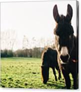 Donkey And Pony Canvas Print