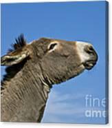 Donkey Demanding A Treat Canvas Print