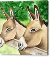 Donkey Duo Canvas Print
