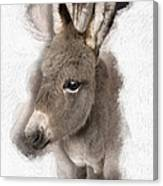 Donkey Foal No 02 Canvas Print