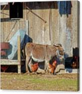 Donkey Goat And Chickens Canvas Print