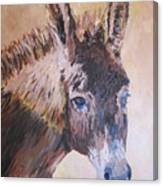 Donkey In The Sunlight Canvas Print