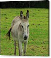 Donkey On A Farm Canvas Print