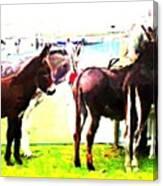 Donkeys At Mullaghmore Canvas Print