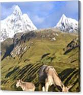 Donkeys Grazing In The Mountains Canvas Print