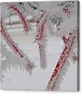 Don't Break My Heart-unique And Rare Formation Of Spiked Snow Icicles  Canvas Print