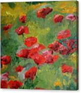 Door County Poppies Canvas Print