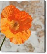Doorway Poppy Canvas Print