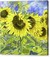 Dordogne Sunflowers Canvas Print