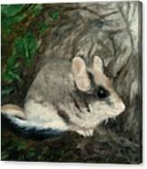 Dormouse Canvas Print
