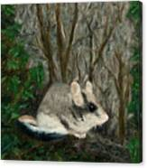Dormouse In Ivy Canvas Print