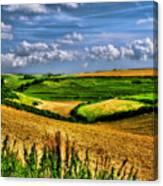 Dorset Farmland Canvas Print
