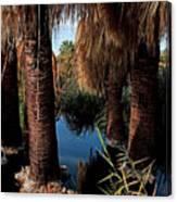 Dos Palmas Oasis Canvas Print