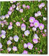 Dotted Meadow Canvas Print