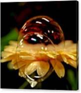 Double Bubble Flower Canvas Print