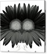 Double Daisy Noir Canvas Print