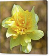 Double Headed Daffodil Canvas Print
