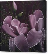 Double Iris Canvas Print