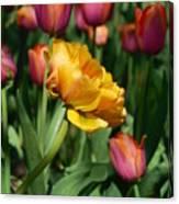 Double Petal Yellow Tulip Canvas Print