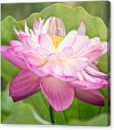 Double Pink Canvas Print