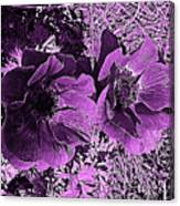 Double Poppies In Purple Canvas Print