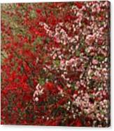 Double Quince Canvas Print