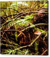 Double Rainforest Canvas Print