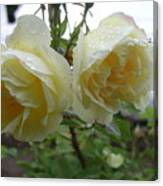 Double Rainy Rose Canvas Print