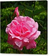 Double Rose Canvas Print