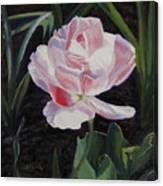 Double Sassy Tulip Canvas Print