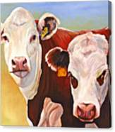 Double Trouble Hereford Cows Canvas Print
