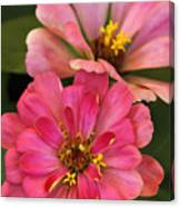 Double Vision In Pink Canvas Print