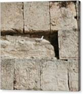 Dove On The Kotel Canvas Print